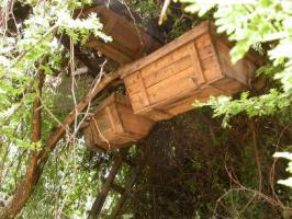 Hanging Beehive (Africa)